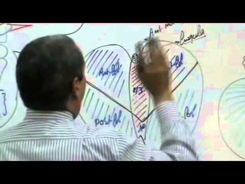 Dr ahmed Galal  Neuro Anatomy 7