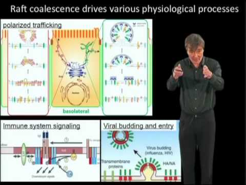 Kai Simons (MPI) Part 2:  Lipid rafts as a membrane organizing principle