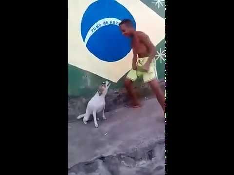 Anteprima Video Quando sei un cane, ma vuoi ballare la sambaaaa!!!