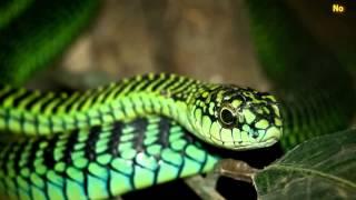 Video 5 nejnebezpečnějších zvířat planety MP3, 3GP, MP4, WEBM, AVI, FLV Oktober 2017
