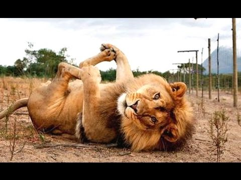 Funny Animals – A Funny Animal Videos Compilation 2015
