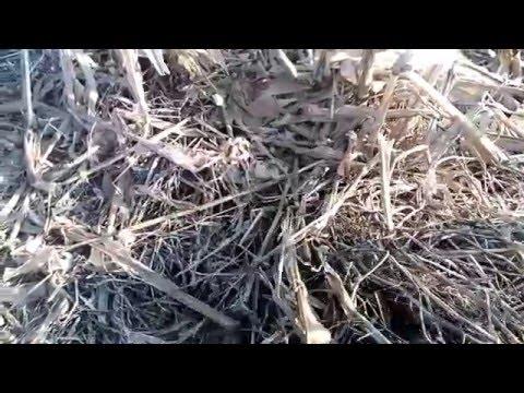 Как перепахивать сидераты весной