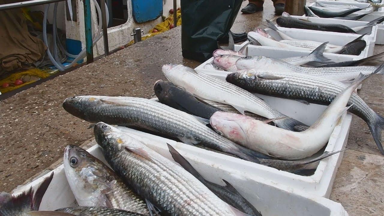 Απίστευτη ψαριά στο Ναύπλιο