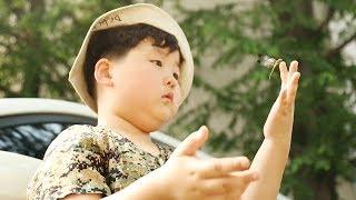 영재발굴단 117회 20170719 SBS곤충에 대한 남다른 관심과 사랑으로 모르는 지식이 없을 정도인 7살 꼬마 파브르 진호를 만나본다.홈페이지 http://program.sbs.co.kr/builder/programMainList.do?pgm_id=22000006827