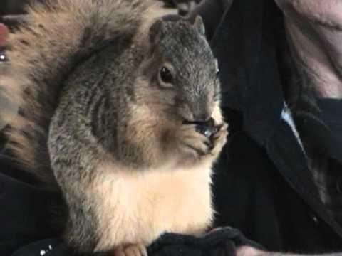Tame squirrel, man's best friend