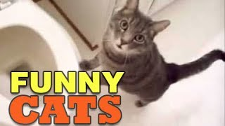 Best Funny Cats Compilation NEW 2014 Try Not To Laugh