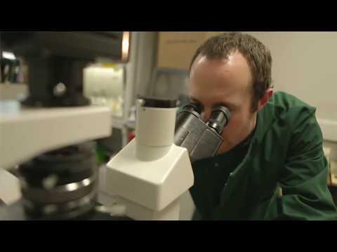 Biowissenschaften an der University of Westminster