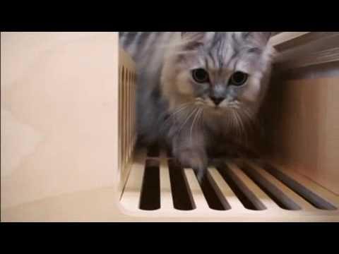 [POTE] Cat litter tray wood box rib