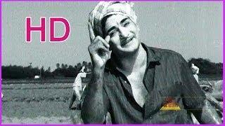 Pattali Araka Dunnali Meraka - Superhit Song - In Chitti Chellelu Telugu Movie - NTR , Vanisree (HD)