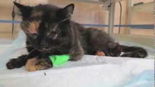 Fraktura horní i dolní čelisti u kočky