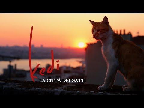 kedi-la-citta-dei-gatti-il-film-documentario-sui-felini-di-istanbul