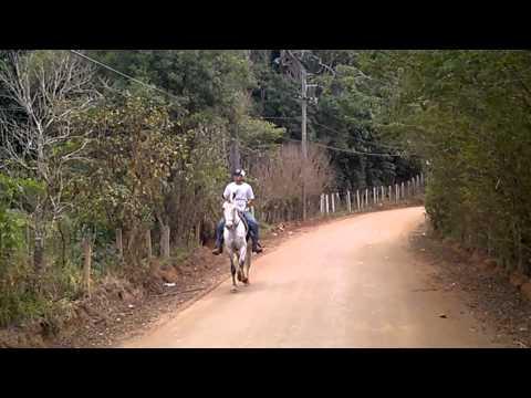 JUMANJI DO TOURO SENTADO (видео)