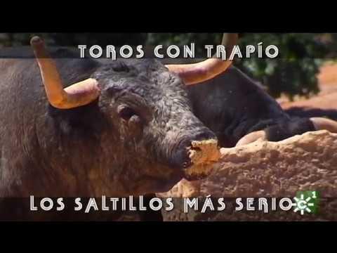 Los toros con más trapío de Saltillo para Ceret  Toros desde Andalucía