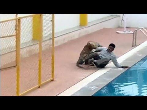 Ινδία: Έξι τραυματίες από επίθεσης λεοπάρδαλης σε σχολείο