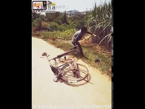 Les chinois sont de vrai comique