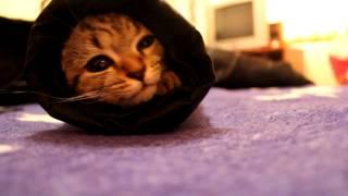 Kitten In A Jacket Sleeve