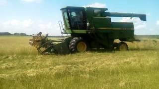 Harvesting Bahiagrass seed in N. Florida: July 2014.