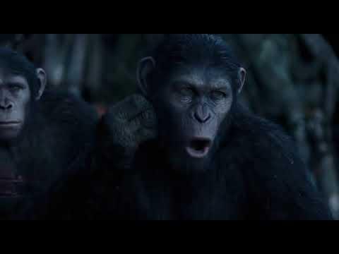 Ape's Story - TV Spot Ape's Story (English)