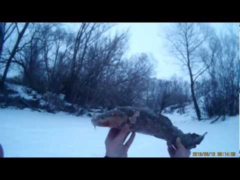 ловля налима с чернушенко