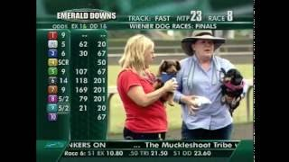 Nonton 2016 Wiener Dog Races Final Film Subtitle Indonesia Streaming Movie Download