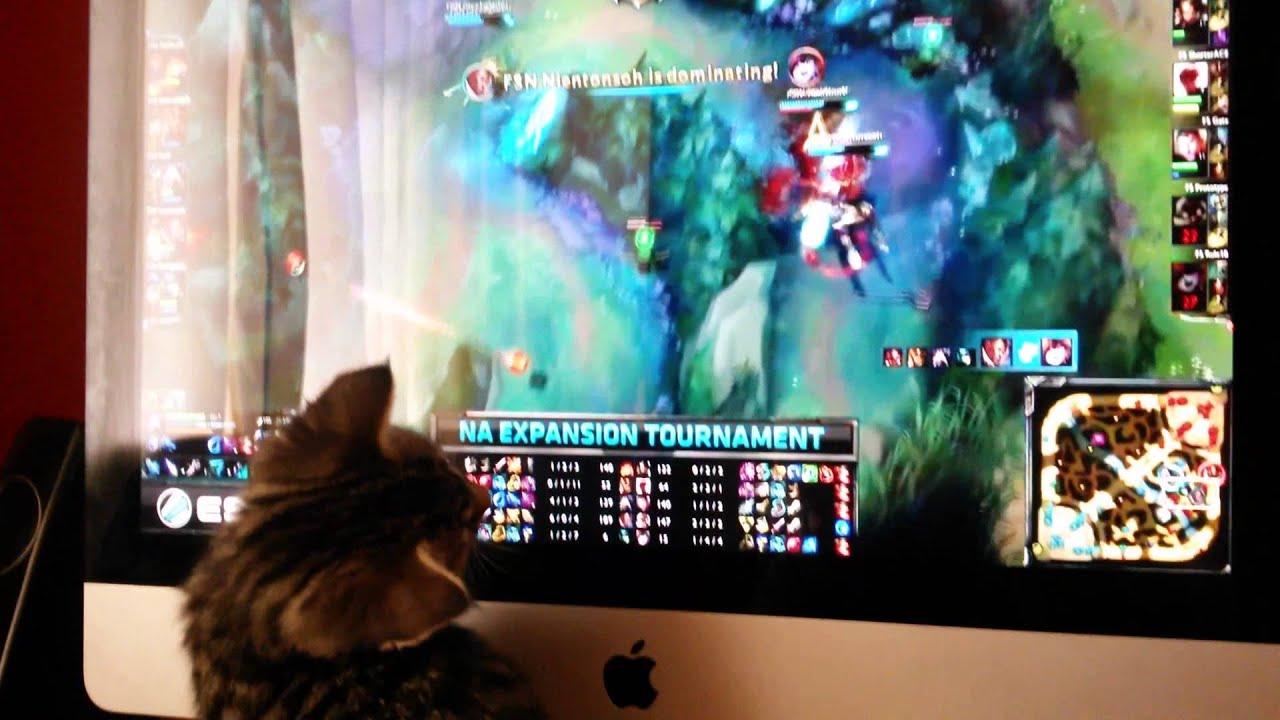 Liên Minh Huyền Thoại: mèo cũng đam mê LOL :D