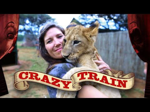 Our Wild Animals Meet Africa's Wild Animals | Crazy Train Episode 7