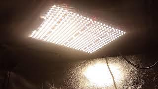 ViparSpectra Pro series P1500 SMD tech led grow light flower tent update by Budzilla saurus
