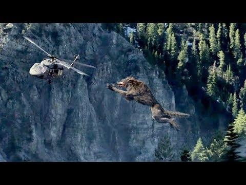 Video Lobo gigante | Rampage | 1080p download in MP3, 3GP, MP4, WEBM, AVI, FLV January 2017