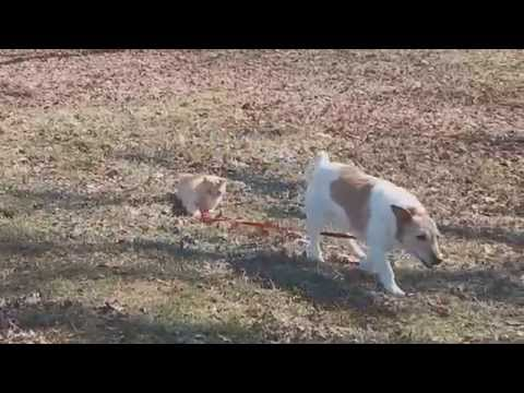 Cat won't let Dog move too far