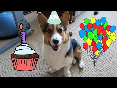 GIVING MY CORGI HIS BEST DAY EVER – Life After College: Ep. 393