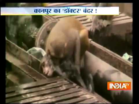 Kanpur - SUBSCRIBE to Official India TV YouTube Channel Here: https://www.youtube.com/user/IndiaTV?sub_confirmation=1 Monkey saves electrocuted friend at Kanpur railw...