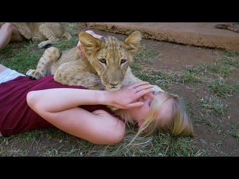 Cute Baby Lions VS Puppy (видео)