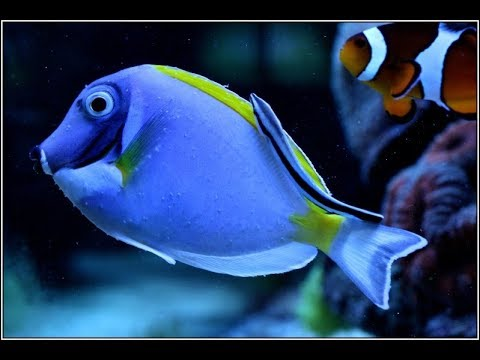how to kill ich and marine velvet in saltwater tank - the only way to kill ich