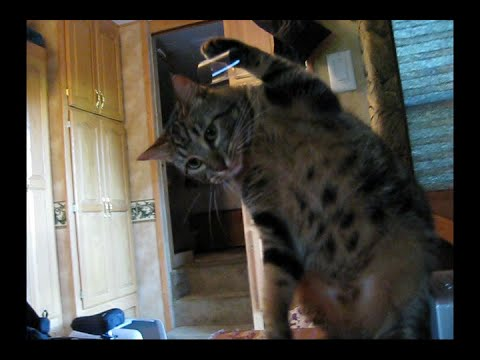 Owner uses interesting method to stop cat from clawing screen door