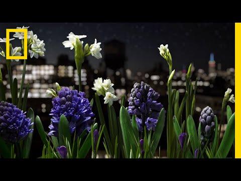Assista a um jardim ganhando vida neste deslumbrante timelapse