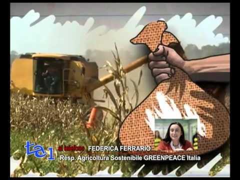 PRESA DIRETTA: PRO OGM LA REPLICA DI GREENPEACE ITALIA