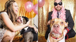 """Dogs from the Maricopa County Animal Care and Control have been left smiling after an epic party. The senior pups are all looking for their forever homes after the organization held a prom to raise awareness about adopting shelter dogs. Henry loves to play fetch, Bubba is known as a """"ladies man"""" and Franklin and Harriet are neck-and-neck in a fashion competition. InsideEdition.com's Keleigh Nealon (https://twitter.com/KeleighNealon) has more."""