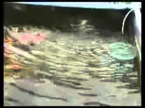 สารคดี ปลาทอง ตอนที่ ๒/๖
