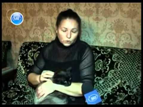 Кот наделавший шуму в Молодечно обрел новых хозяев - DomaVideo.Ru