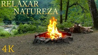 Download Lagu Som da Natureza para Relaxar - Vídeo 4K com Sons da Floresta, Riacho e Fogueira - Dormir, Meditar Mp3