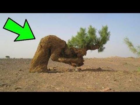 Peygamberimiz Bu Ağaç Altında Dinlendikten sonra Ağaca Beklenmeyen Bir Mucize Oldu !