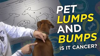 Is it Cancer? Pet Lumps&Bumps  - VetVid Episode 023