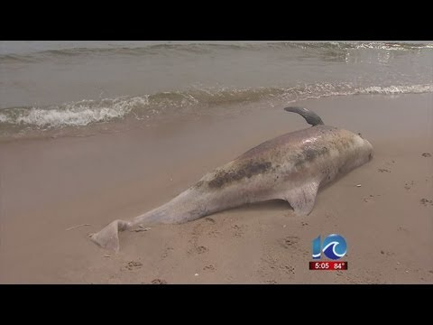 NOAA issues alert in dolphin deaths