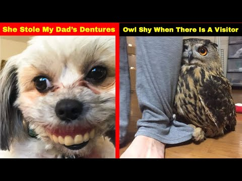 Funny photos - Hilarious Photos That Prove Once You Get A Pet You Will Never Be Sad Again