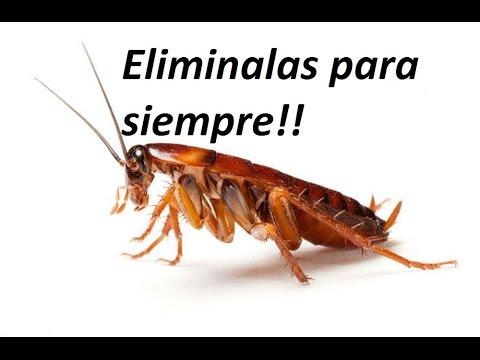 Video como eliminar cucarachas sin productos t xicos - Remedios para eliminar cucarachas ...