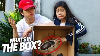 Video What's Inside The Box Challenge!! | Ranz and Niana MP3, 3GP, MP4, WEBM, AVI, FLV Februari 2019