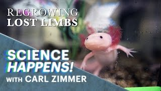 Science Happens! | Episode 8 | Regrowing lost limbs