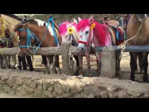 Horse back riding at Wright park,Baguio City