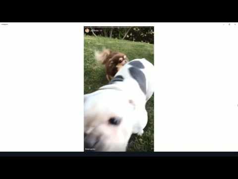 Paris Hilton and beautiful dogs