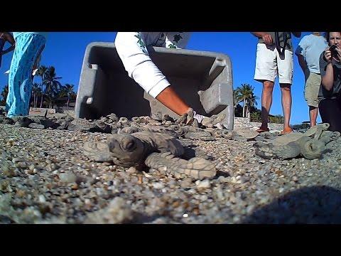 Angler West TV turtle release program